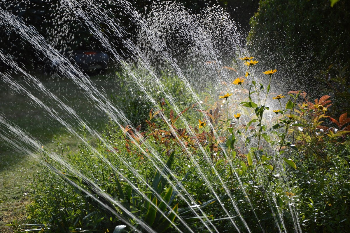 Plants can absorb water best during the early morning hours.