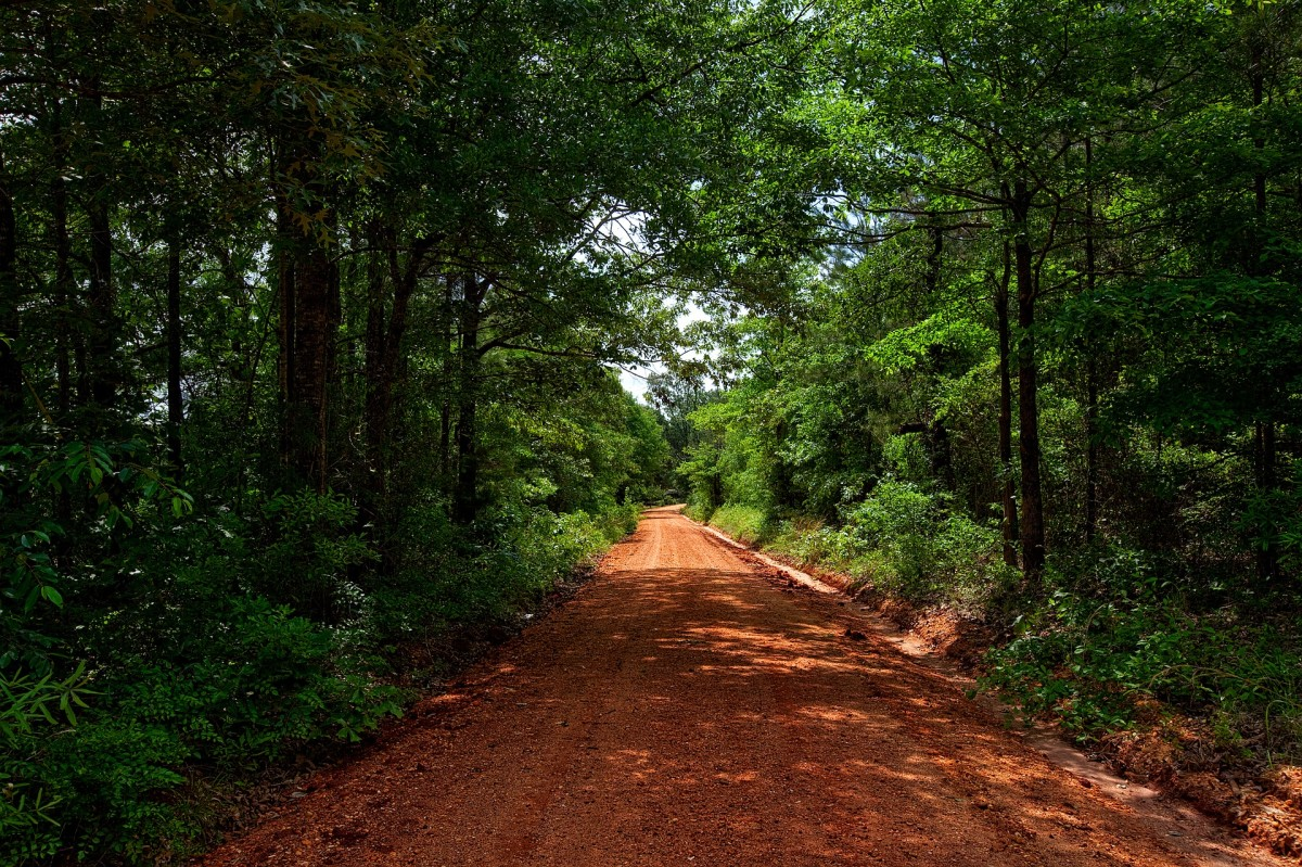 This old Alabama road is composed of red clay.