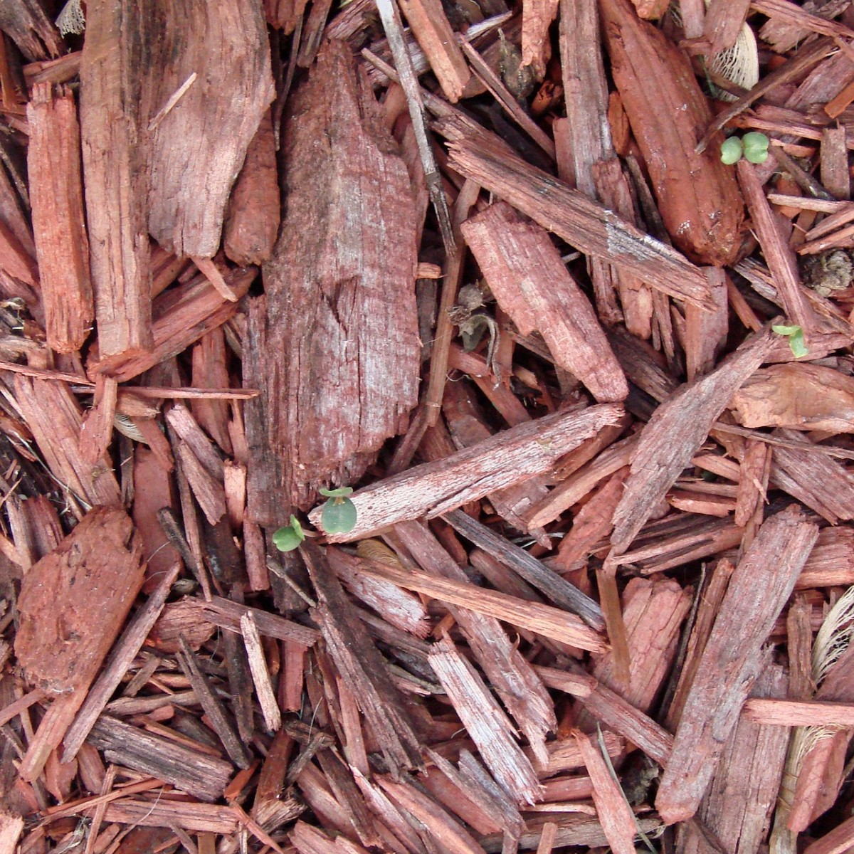 Mulch is a form of organic matter.