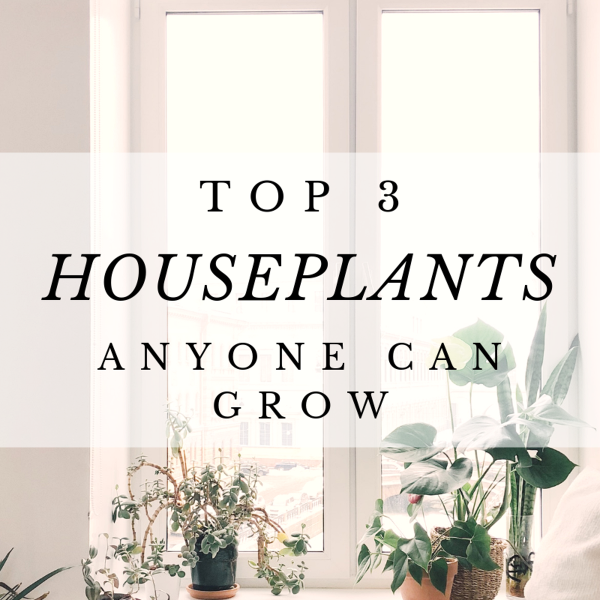 Top 3 Hard-to-Kill Houseplants for Absolute Beginners