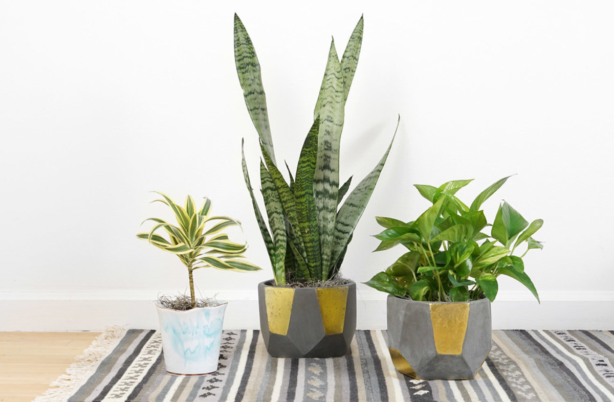 The best houseplants for those with black thumbs!