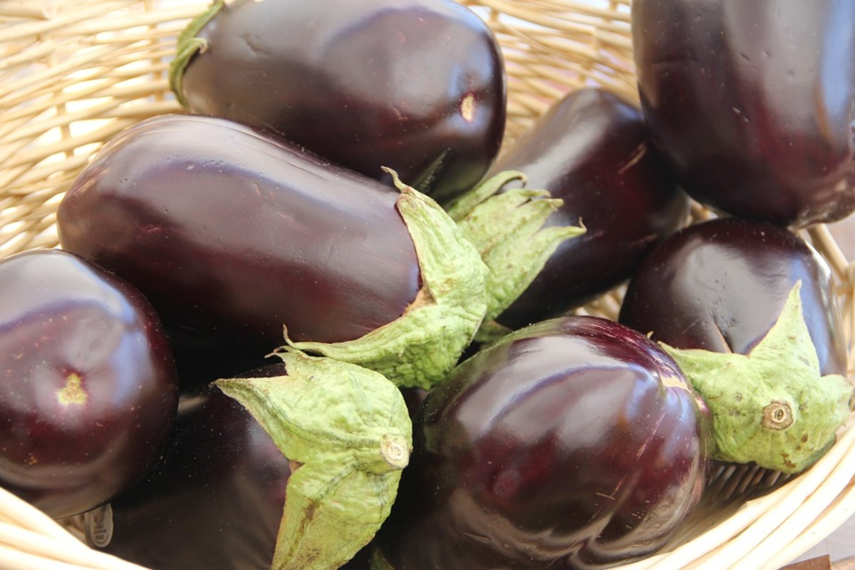 How to Grow Any Kind of Eggplant