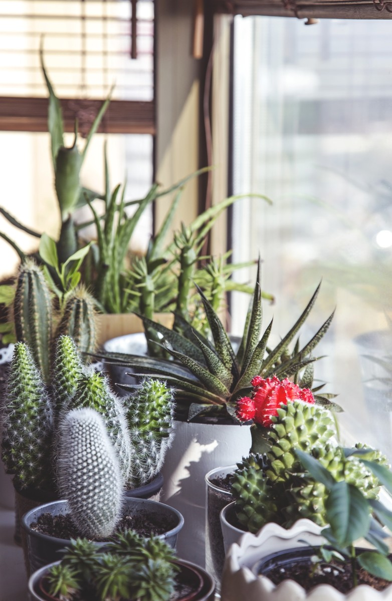 Succulents and cactus require a lot less watering than traditional houseplants.