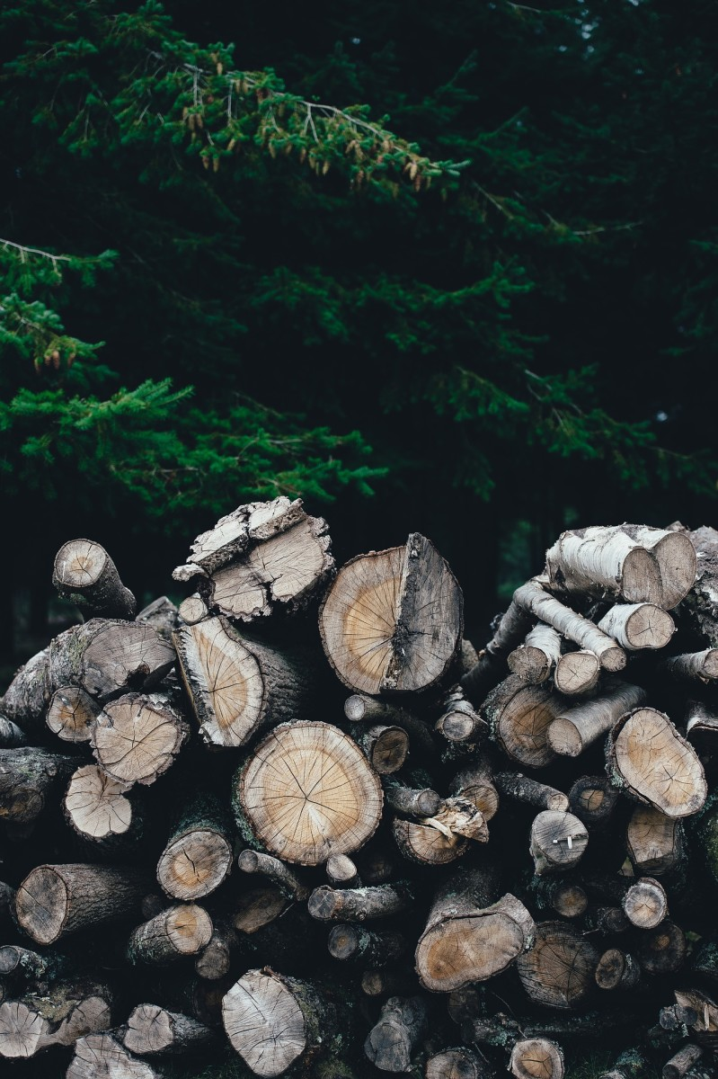 Great example of a loosely stacked woodpile in a shaded area.