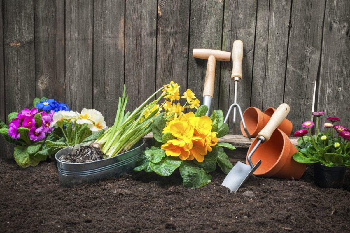 Turning and tilling will give the flowers the ability to easily root. into the soil.