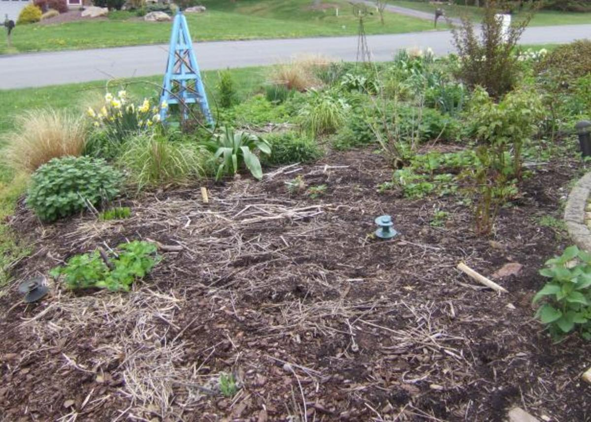 Clean up all the old plant material and cut back the perennials so they grow back.