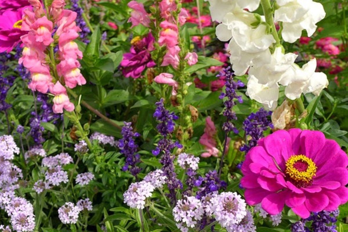 Secrets to Creating a Picture-Perfect Flower Bed