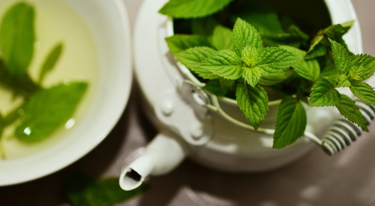 Peppermint, one of the most common forms of mint.
