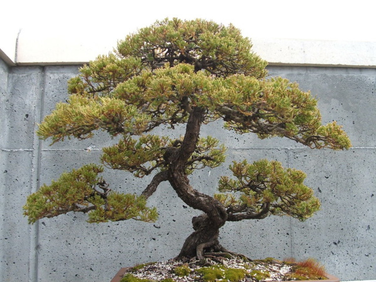 Essential tools are a must-have to create a pristine bonsai specimen.