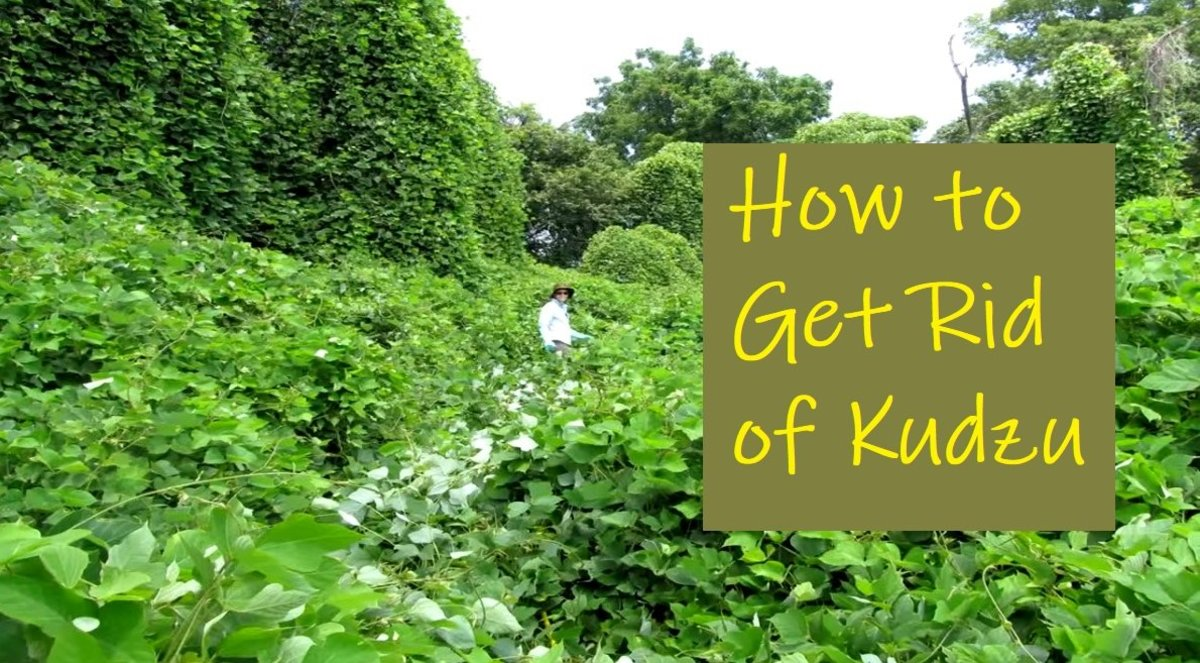 How to Get Rid of Kudzu