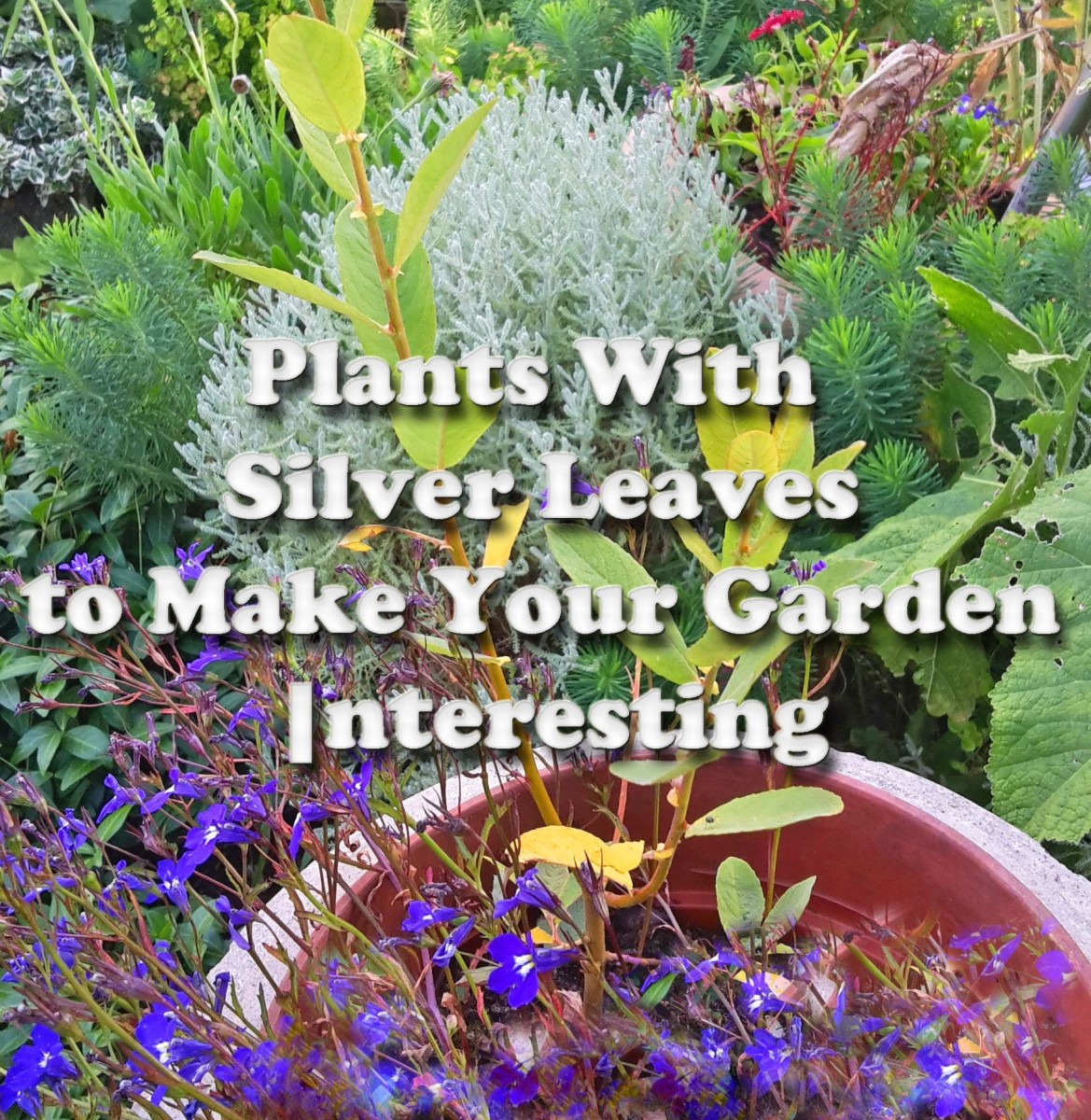 5 Plants With Silver Leaves to Make Your Garden Interesting