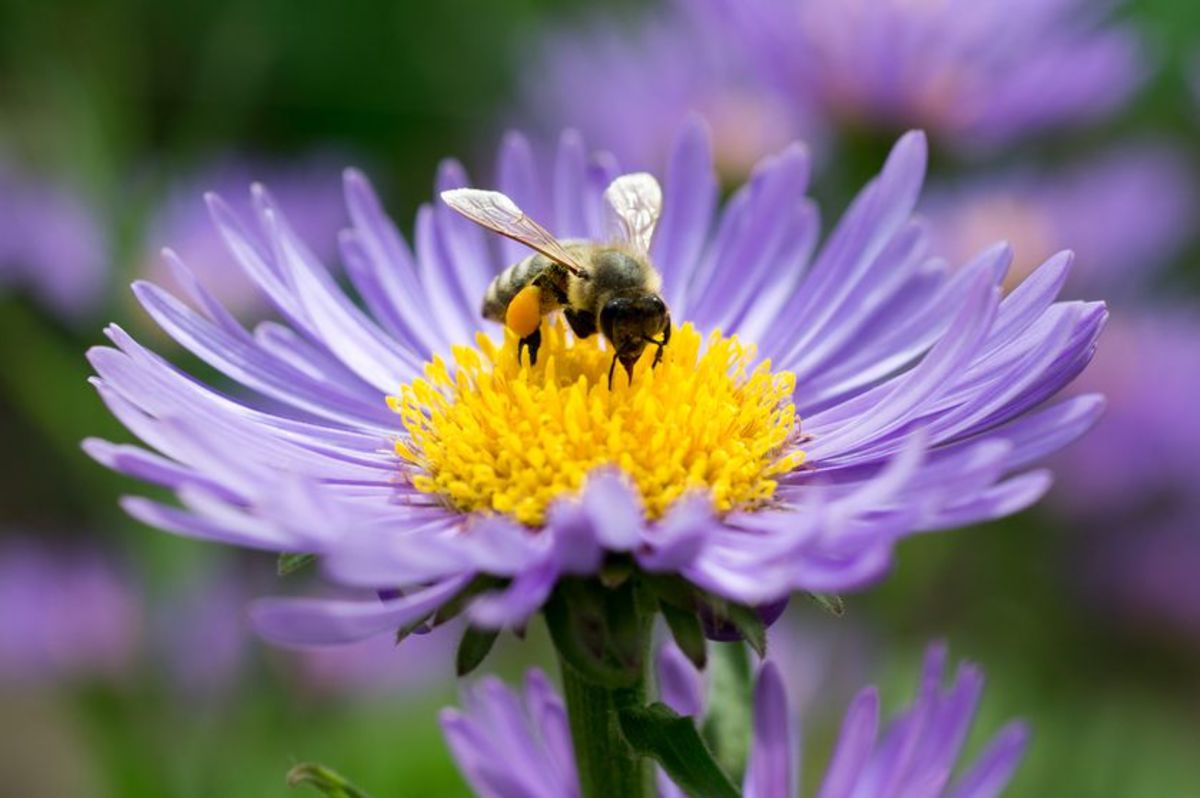Creating a bee-friendly environment in your garden can help reduce colony collapse.