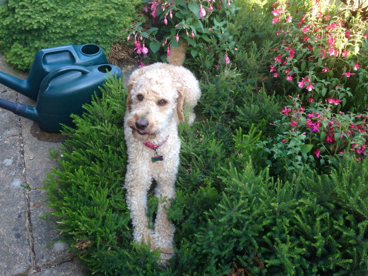 Top Aromatic Plants for a Sweet Smelling Dog
