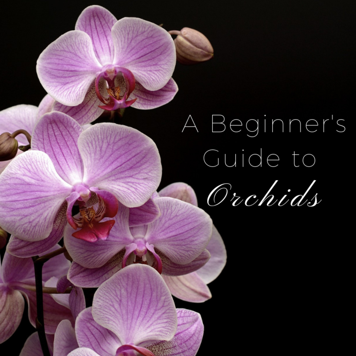 This guide provides all the data you need to grow wonderfully beautiful orchids.