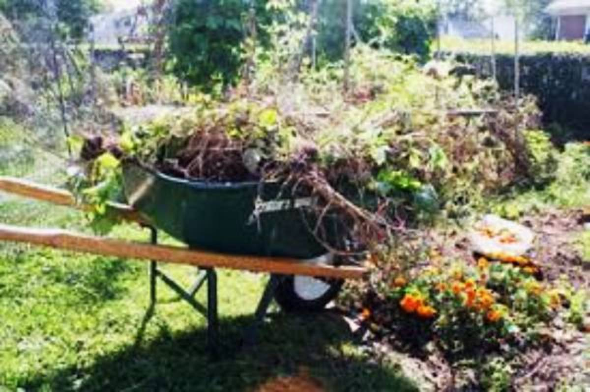It's time to clean up the summer garden to get ready for fall planting.