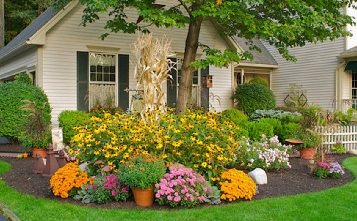 Fall blooms add fiery beautiful color to your yard.