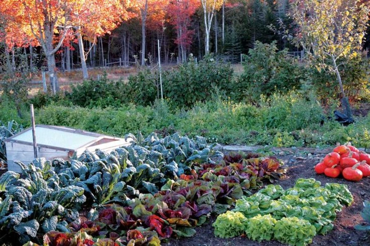 A great vegetable fall crop is worth the effort!
