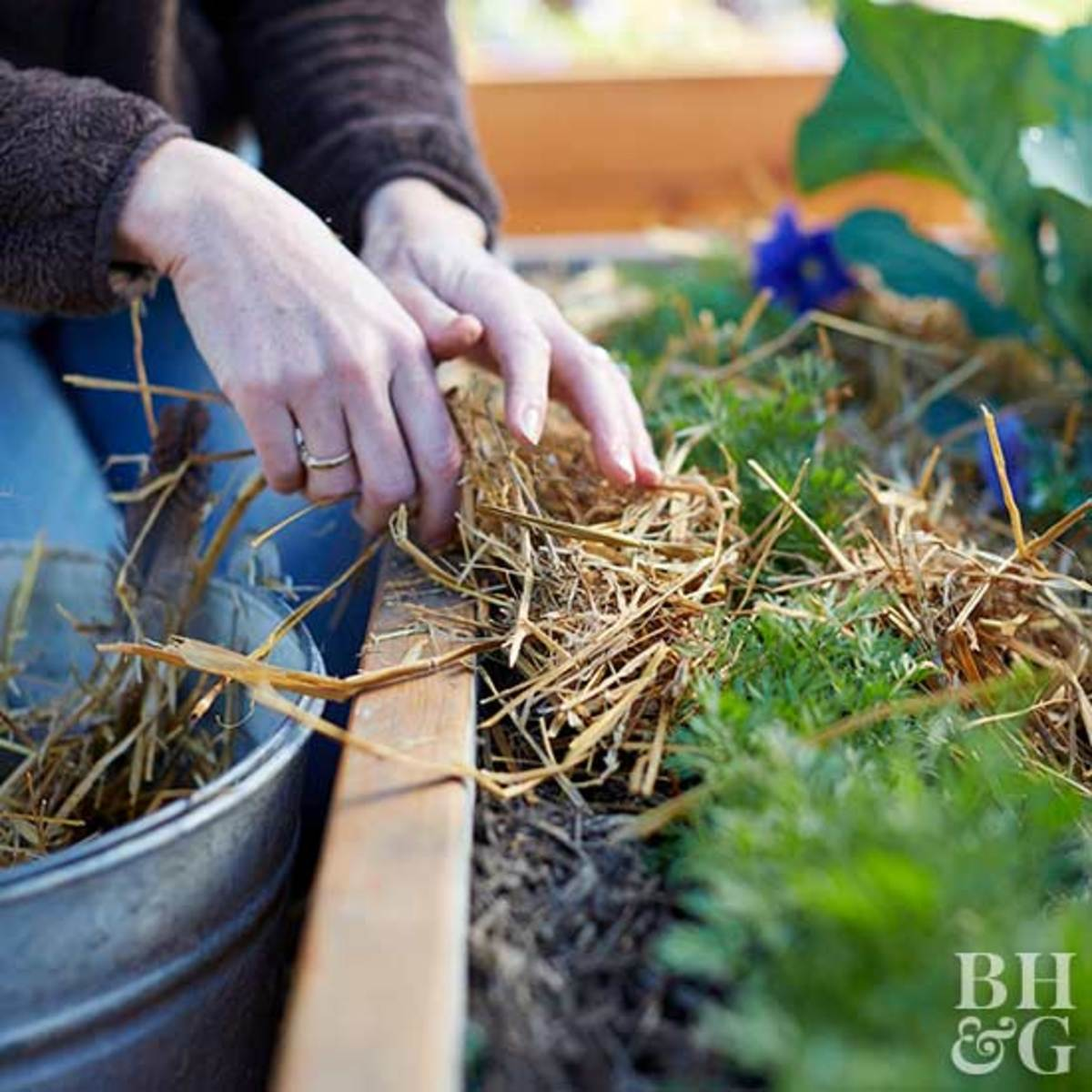 Protect your perennials by adding mulch during the cold weather.
