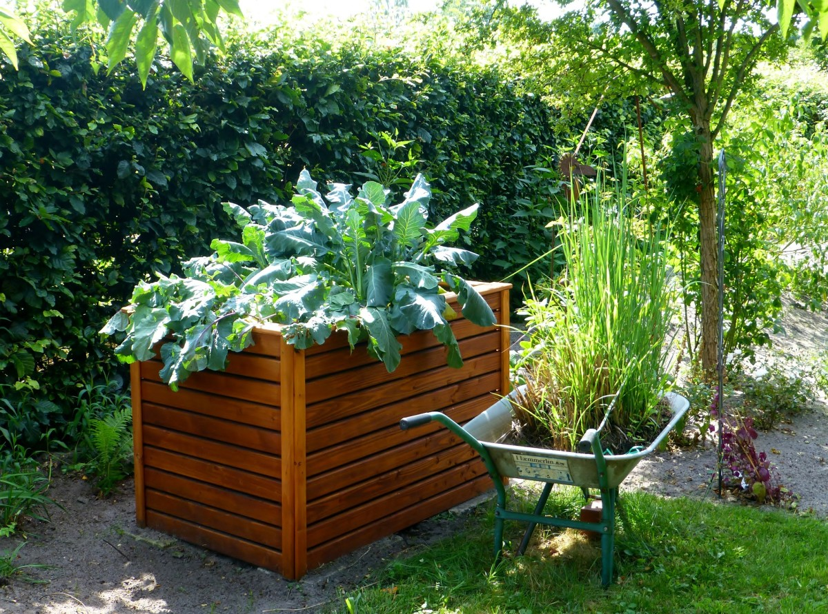 Raised beds are easy for gardeners with limited mobility.