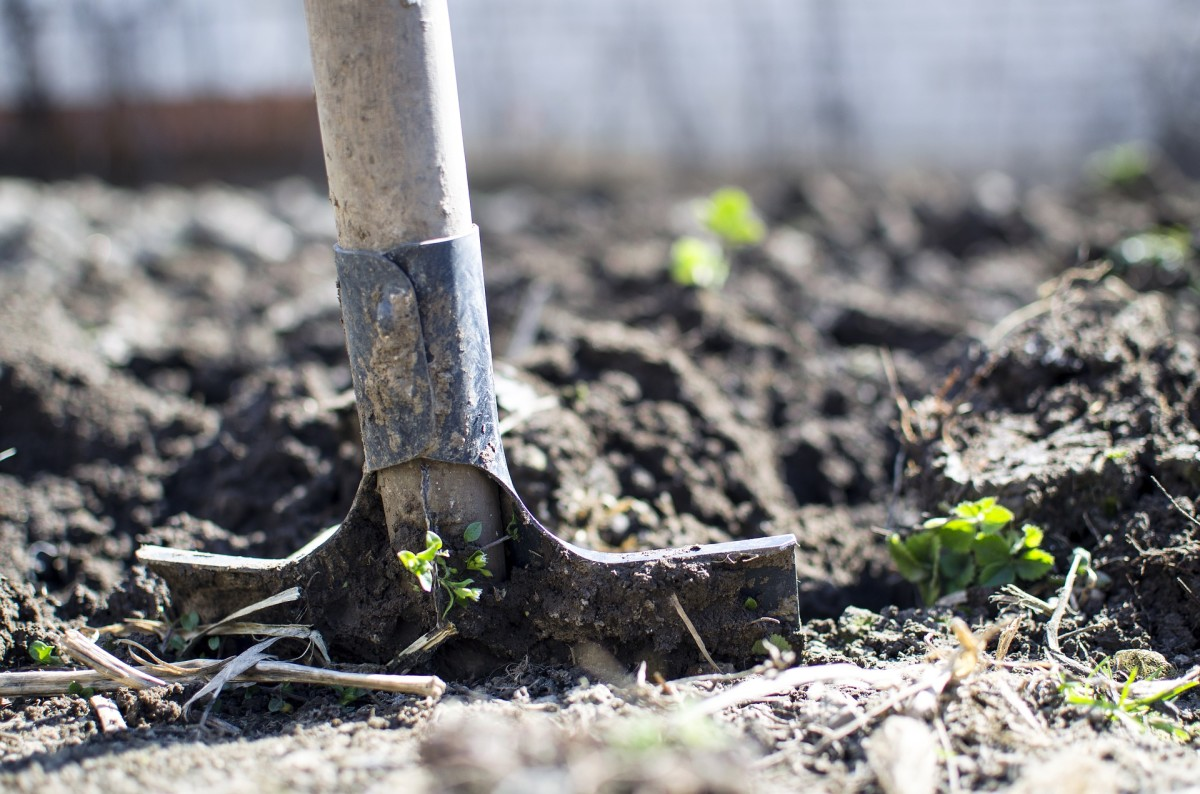 This article will break down the pros and cons of tilling so that you can decide what kind of approach is best for your garden.