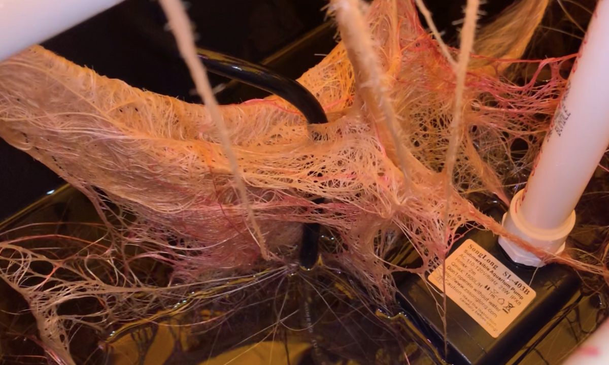 Roots from plants in our hydroponic system.