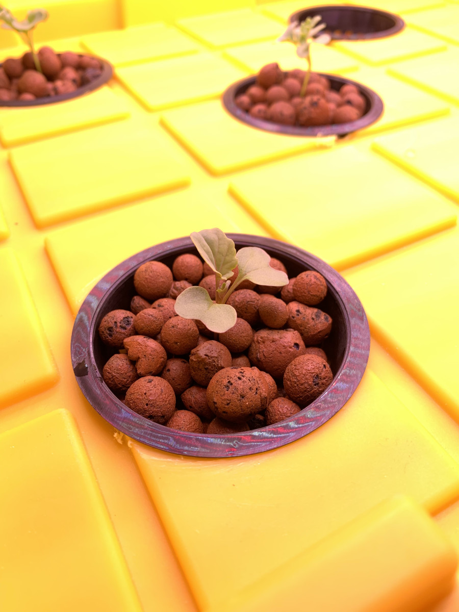 Our hydroponic system uses clay pebbles as the growing medium.