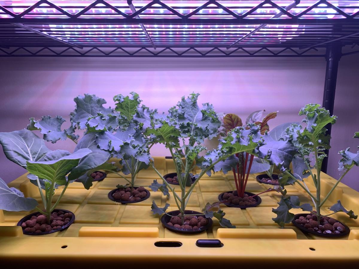 Our DIY hydroponic system.