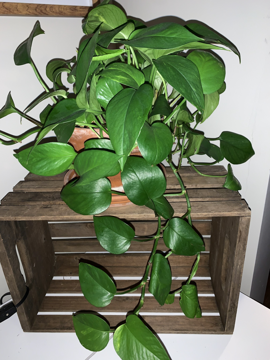 Top 3 Indoor House Plants