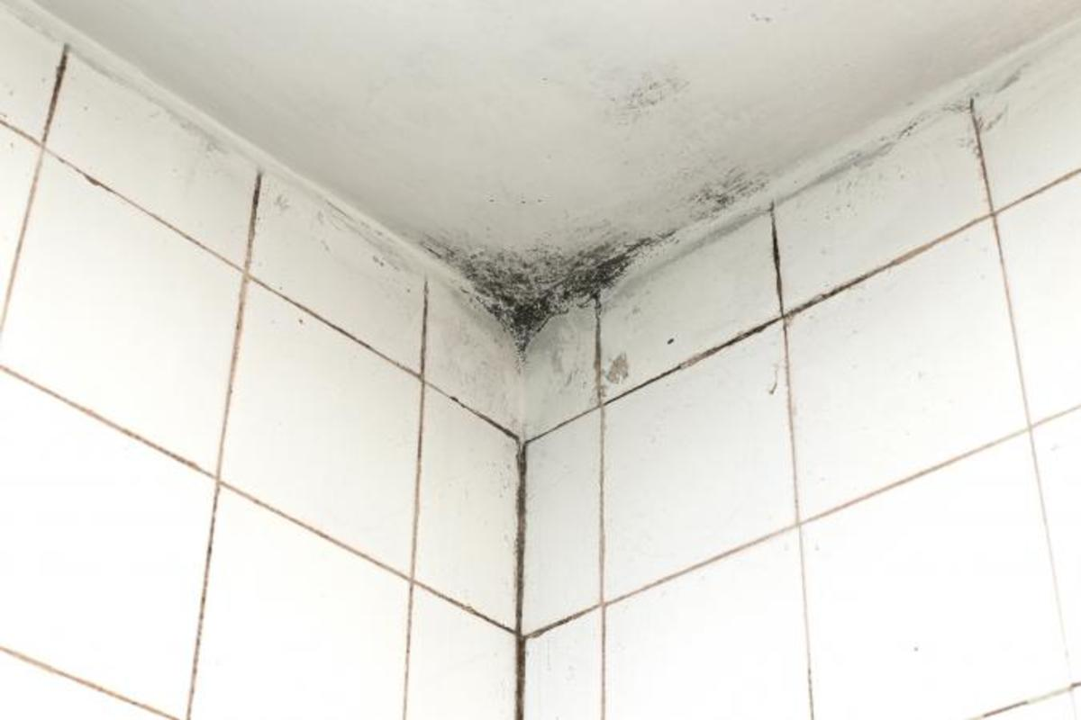 Tips for Painting Moldy Bathroom Walls and Ceilings