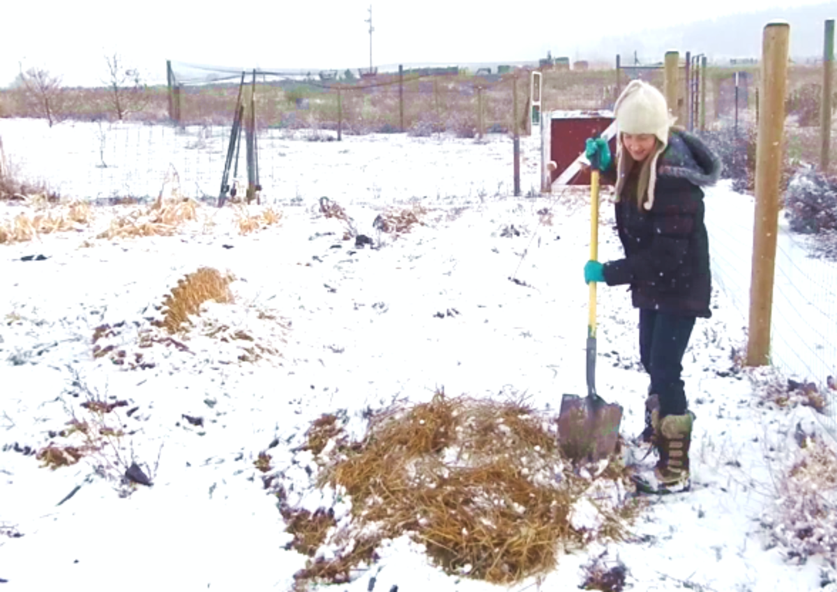 The magic ingredient to overwinter your carrots is straw—just be sure not to confuse it with hay!