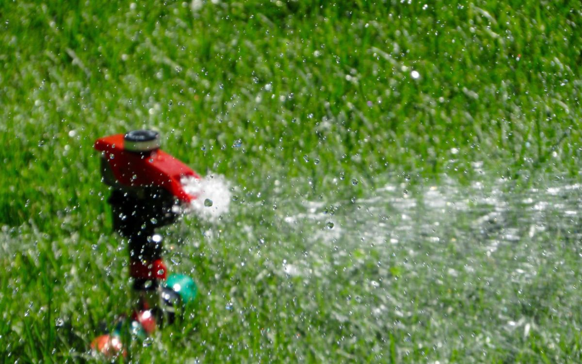 Remember to apply fertilizer after the first time you mow and then water the lawn