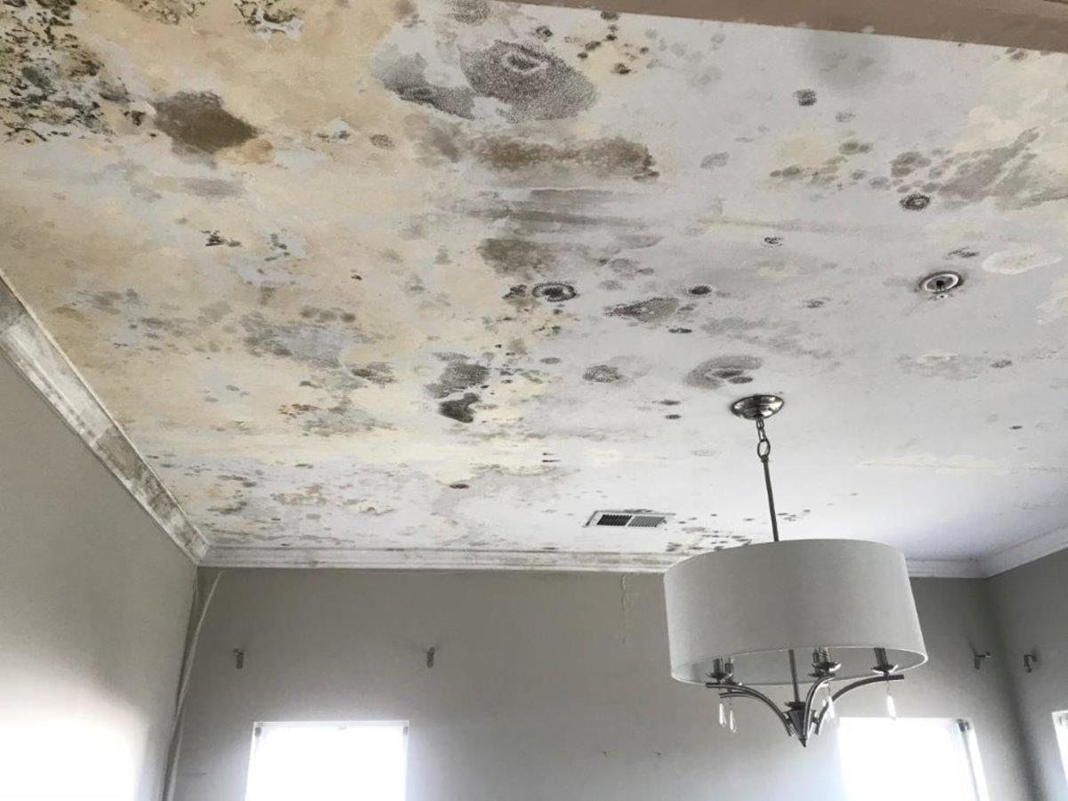 Excessive mold growth on a ceiling can often be traced to roof leaks above.
