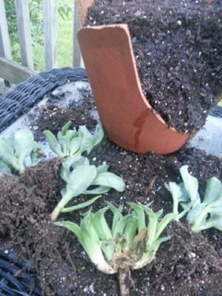 how-to-make-a-fairy-garden-from-a-broken-clay-pot