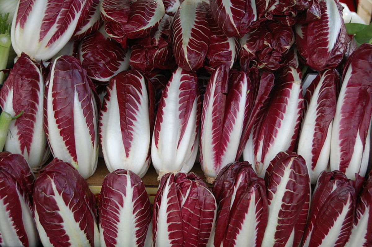 Radicchio Treviso has has an elongated head similar to endive.