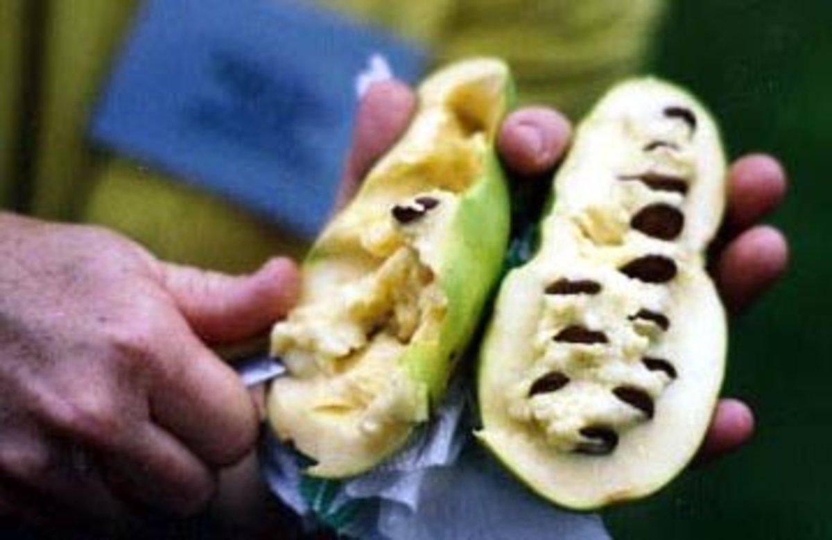 The soft inner flesh is usually eaten fresh.