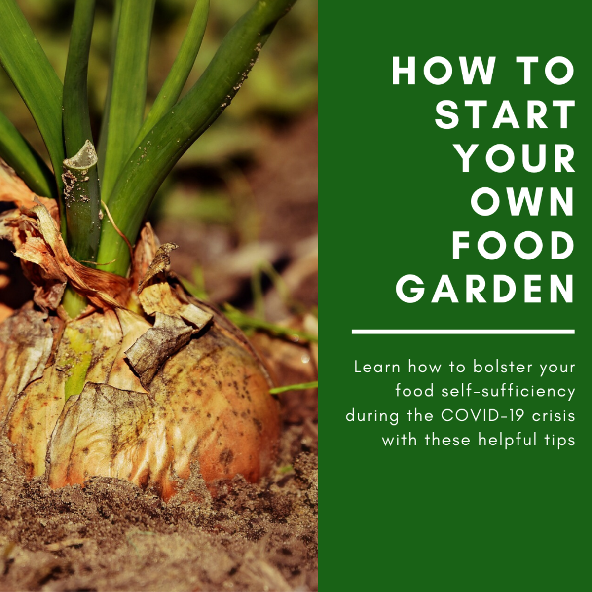 This guide will break down how to bolster your food self-sufficiency by starting your own food garden with common elements you likely already have around the house.
