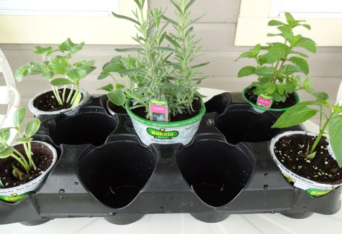 Making Plant Containers Using Household Items