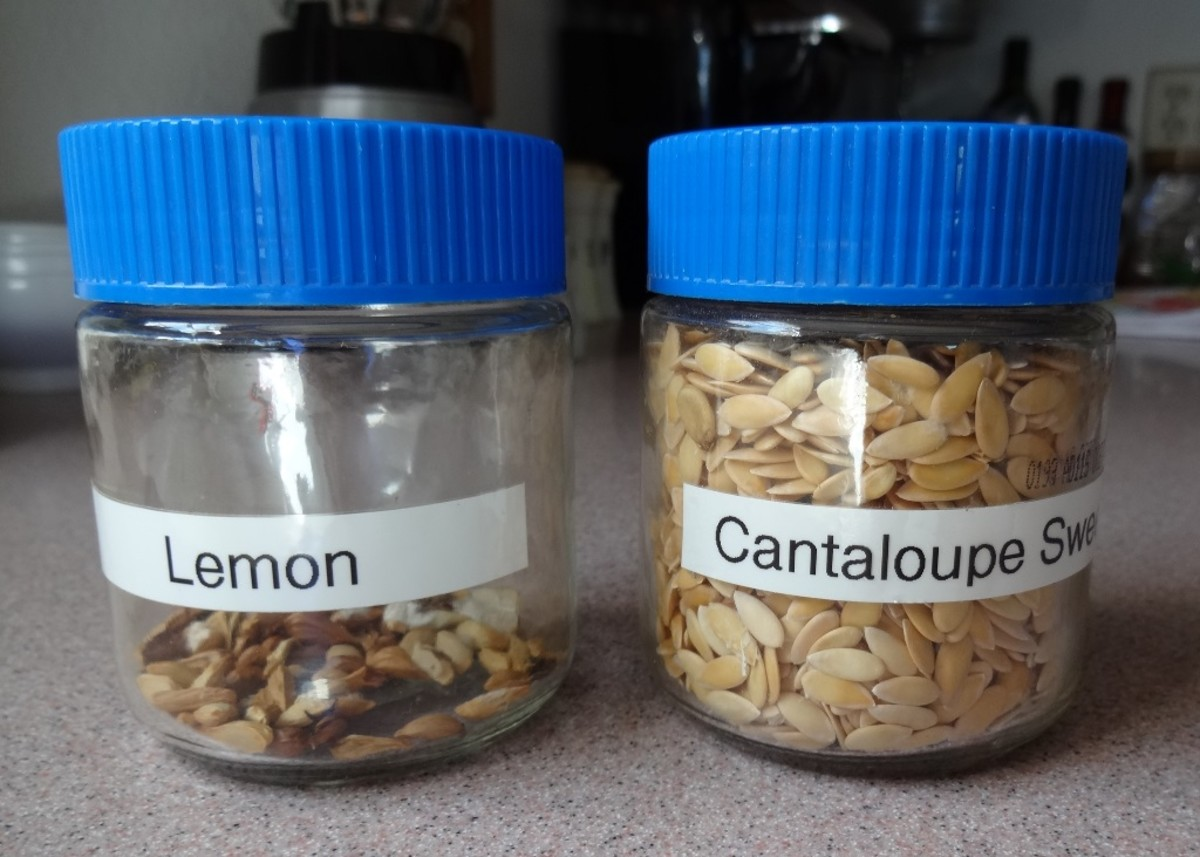 Use glass jars with tight fitting lids to help preserve the life of your seeds.