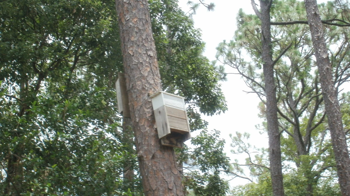 Bat houses strategically placed keep mosquitoes at by on the Cole property
