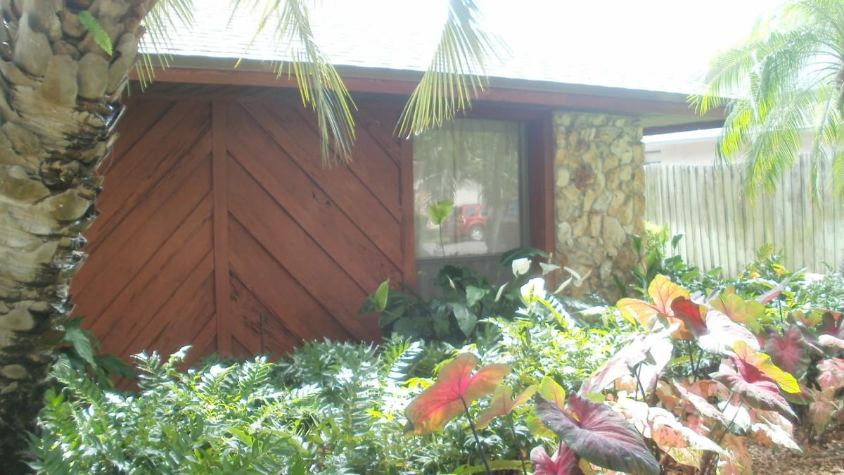 Peak property - Caldiums and Ferns