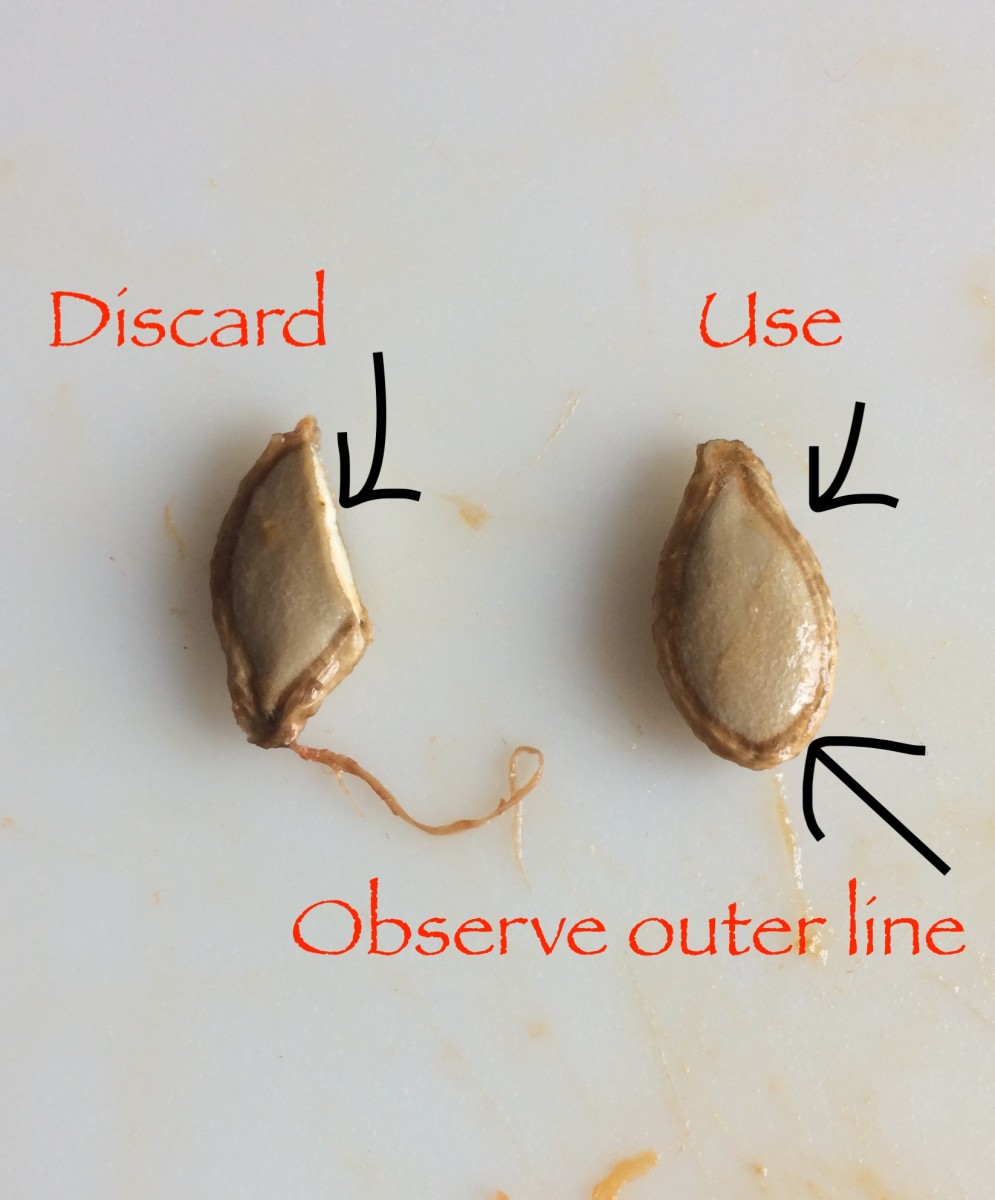 When harvesting pumpkin seeds, make sure that each seed and its outer line is intact—any chipped or broken seeds must be discarded.
