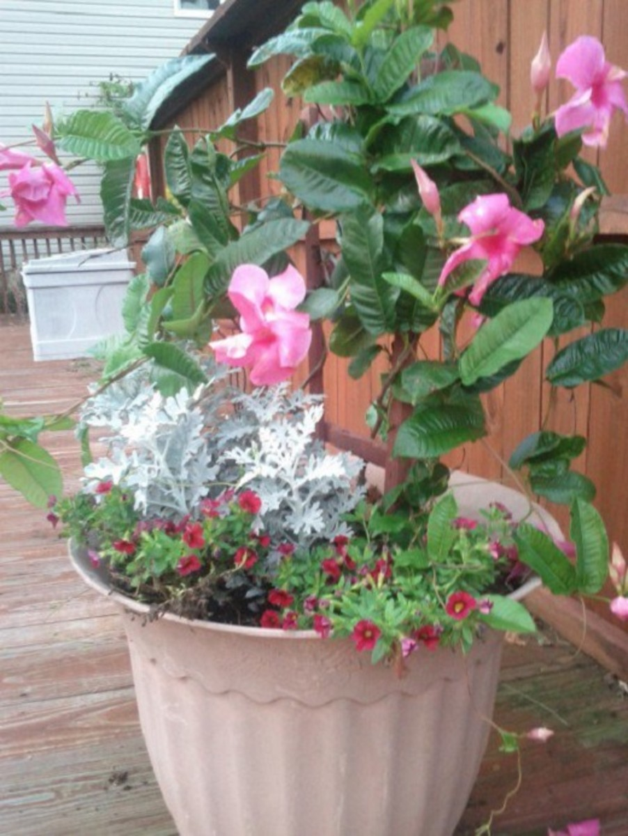 Learn How to Use the Thrill, Fill, and Spill Container Gardening Method