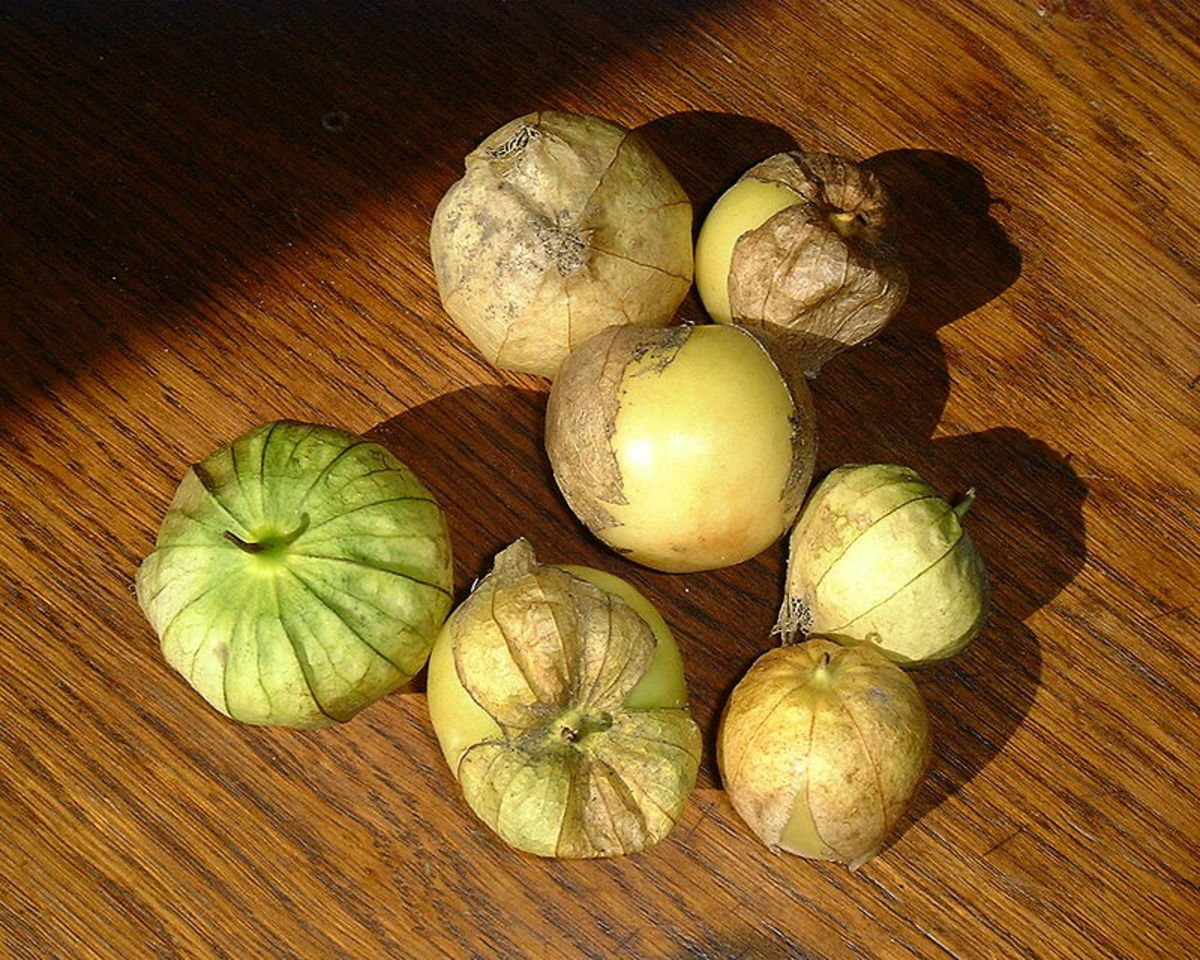 How to Grow Tomatillos (Husk Tomatoes)
