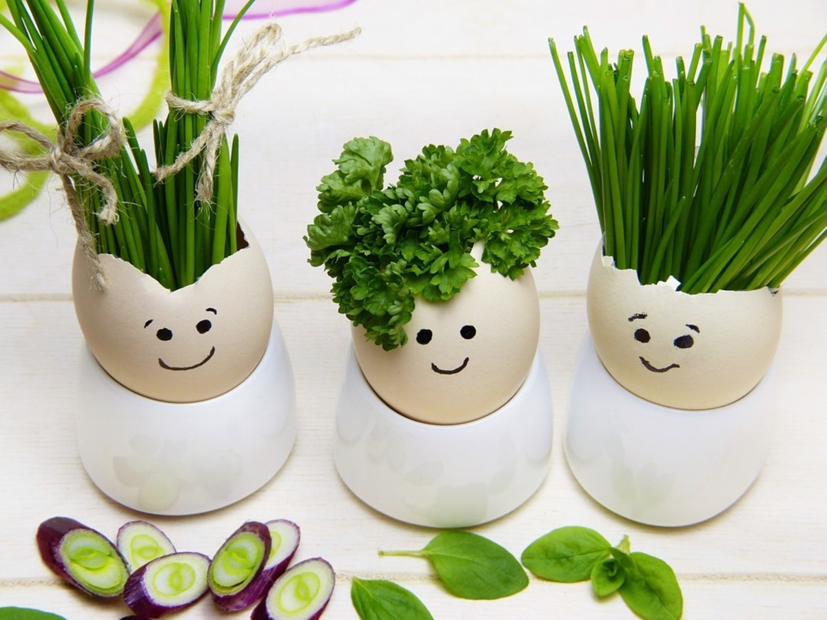 How to Grow Parsley Like an Expert