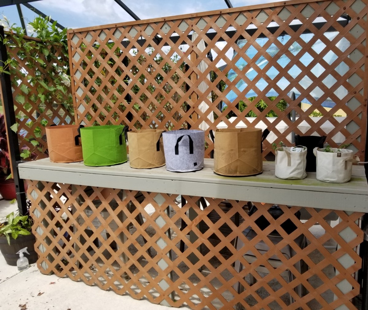 May 1 - The smaller grow pots are at easy-working height here. The cucumbers will climb on the trellis.