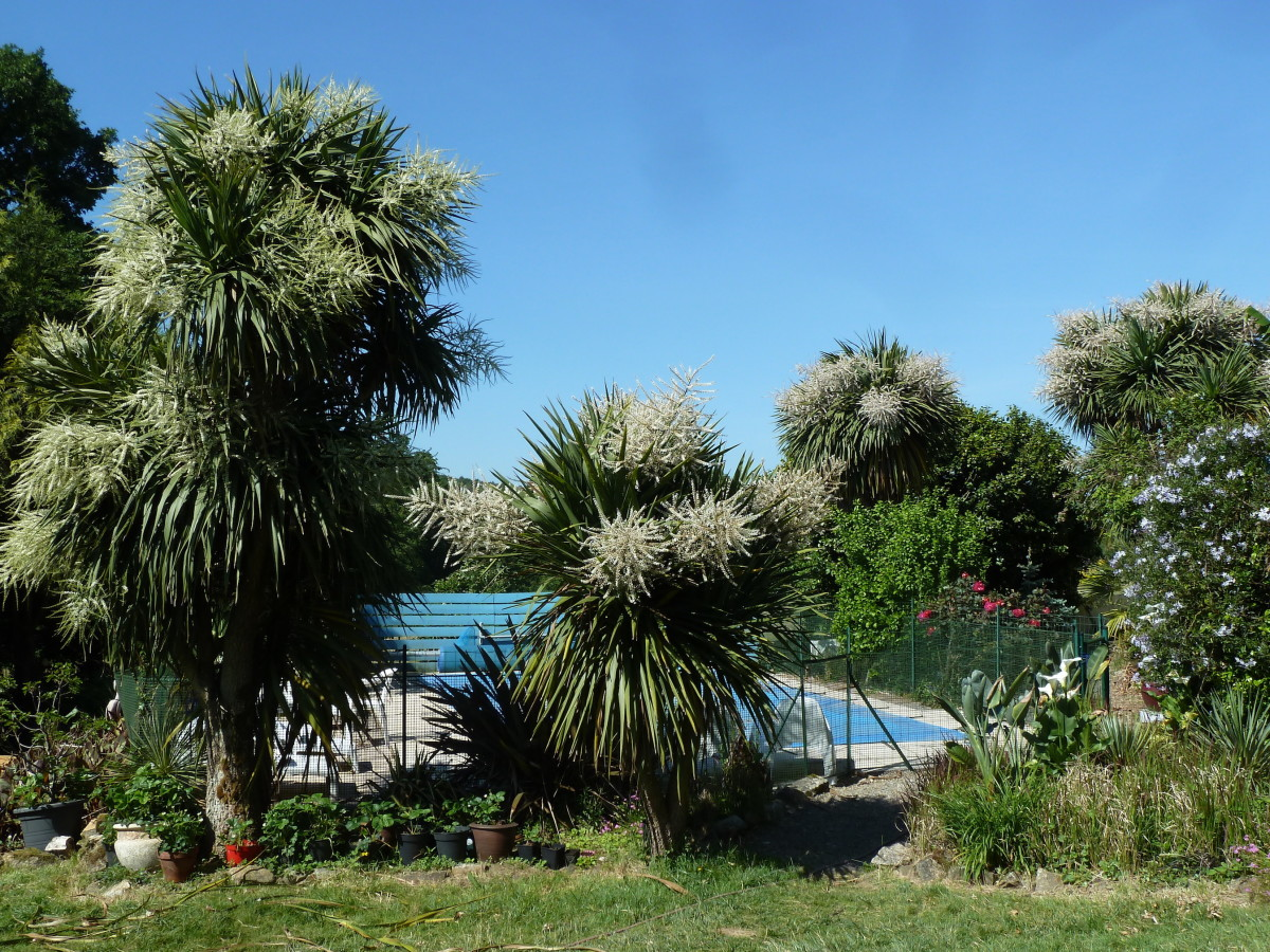 This guide will show you how to propagate new cordyline plants from your existing stock.