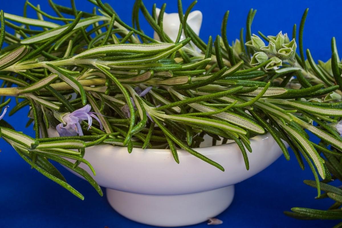 How to Grow Rosemary Like an Expert