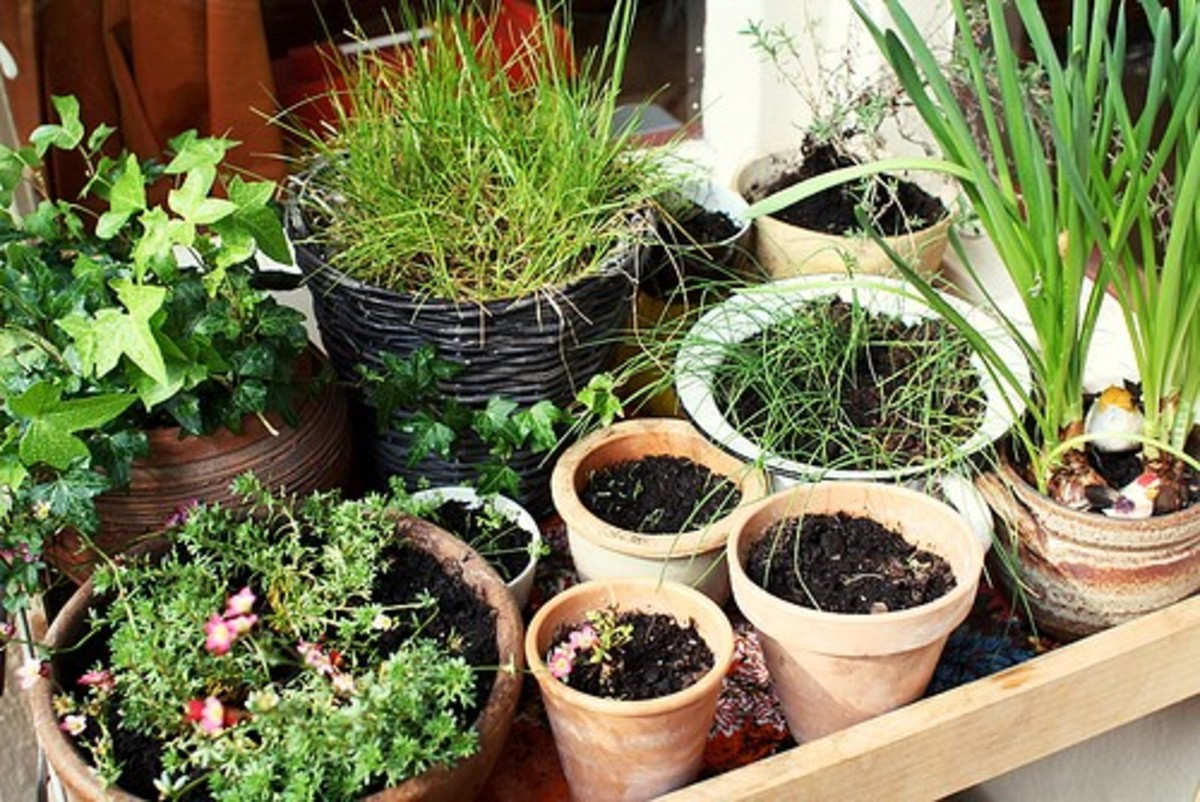 Here is an example of a compact veggie garden in pots.