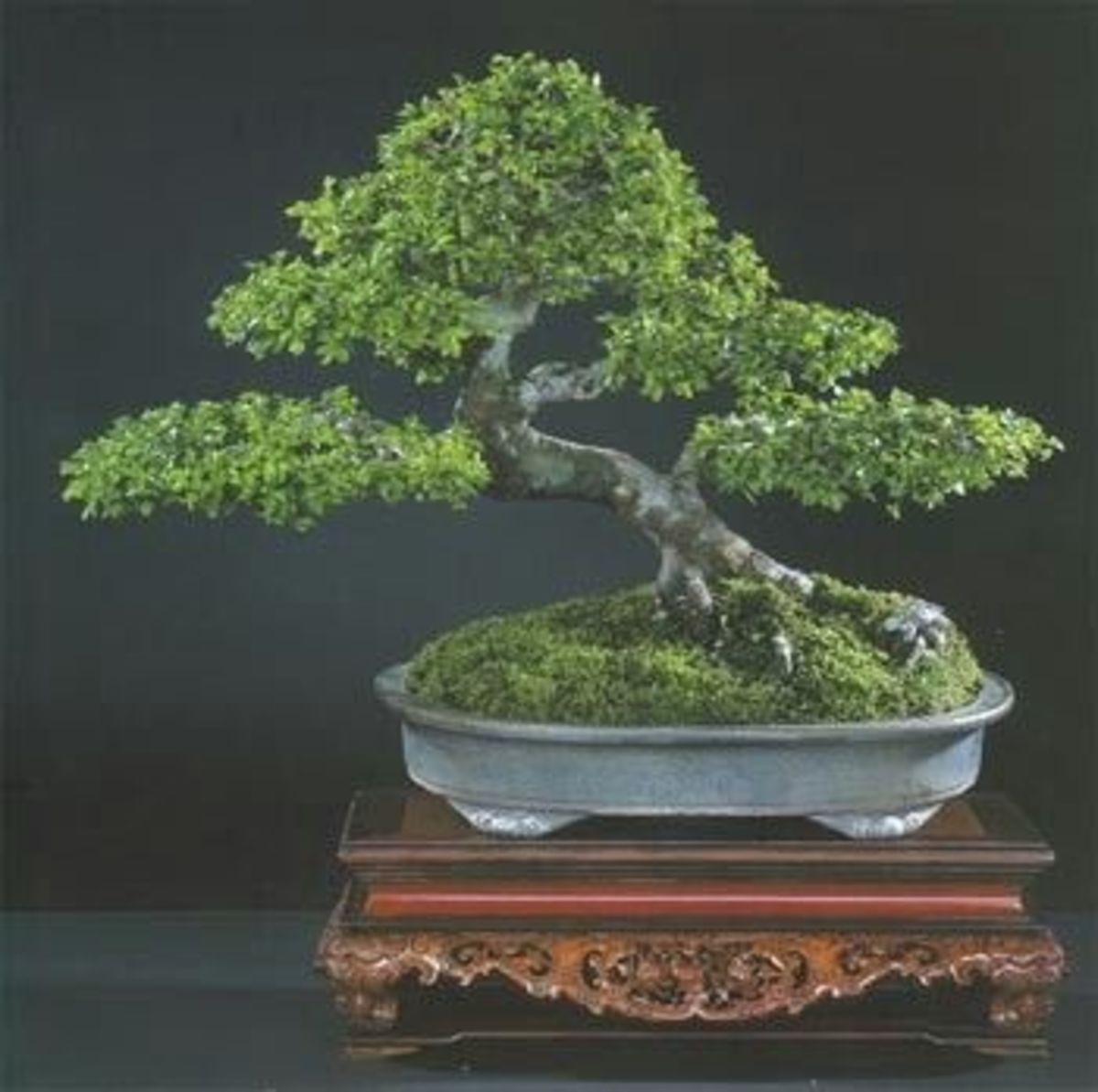 Tips for Bonsai Care and Maintenance
