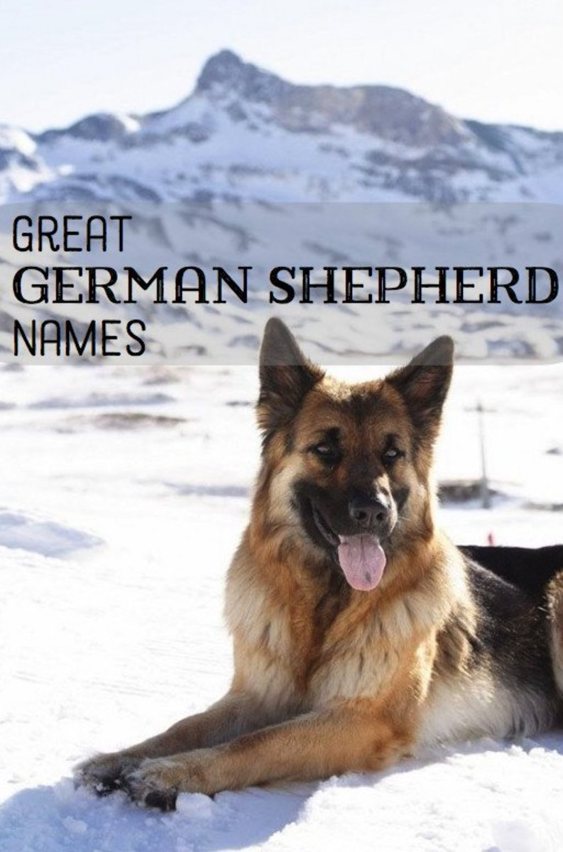 German Shepherds are protective, nobel, brave, and playful. Choose a name that suits your dog's unique personality!